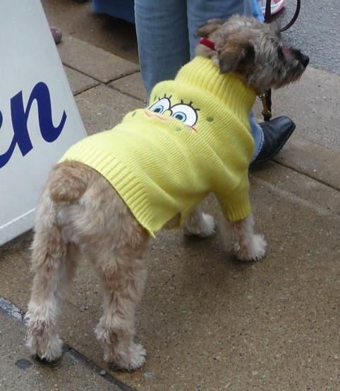 dog wearing a SpongeBob doggy sweater